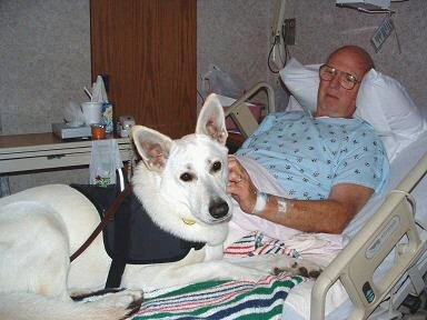 Therapy Dogs: Lower Your Stress, Blood Pressure and Anxiety (1/6)