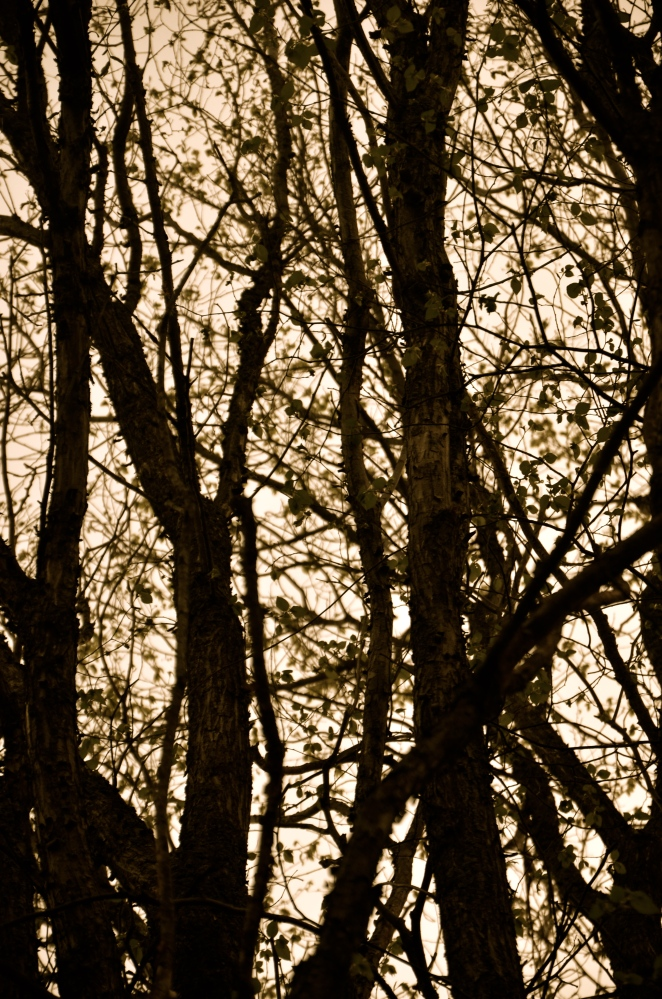 Late Afternoon Spring Light with my Nikon D7000 (6/6)